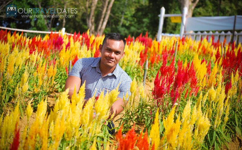 sirao-flower-garden-cebu-philippines-our-travel-dates-image11