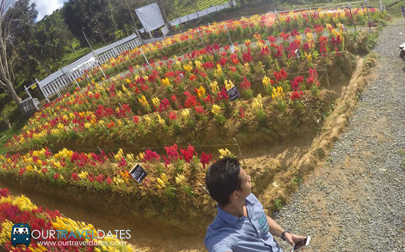 sirao-flower-garden-cebu-philippines-our-travel-dates-image3
