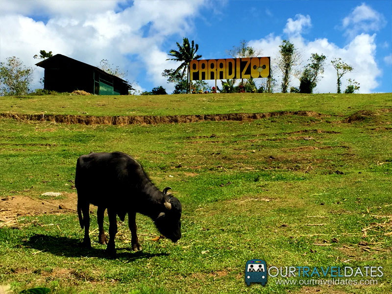 paradizoo-tagaytay-batangas-cavite-zoo-farm-power-of-three-theme-park-image12