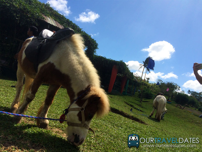 paradizoo-tagaytay-batangas-cavite-zoo-farm-power-of-three-theme-park-image6
